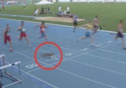 Turchia, gatto attraversa la pista nel mezzo di una gara sui 100 metri Stupore e sorpresa tra i partecipanti del Campionato Balcanico Under 20 - Dalla Rete