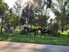 A cavallo lungo le mura di Ferrara, al via il progetto