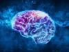 Scoperto il codice che nel cervello permette di comprendere i movimenti altrui (fonte: Istituto Italiano di Tecnologia)