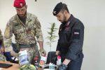 Carlentini, 40enne arrestato per produzione di droga: revocato il reddito di cittadinanza