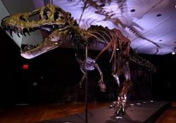 Lo scheletro di un T-Rex all'asta Christie's Si tratta di uno dei più completi esemplari mai trovati - Ansa