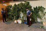 Coltivava piante di marijuana in giardino, artigiana arrestata a Cassibile