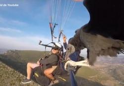 Spagna, si lancia con il parapendio: insieme all'istruttore c'è un avvoltoio Il video dell'istruttore di