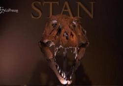 Stan, lo scheletro di T-Rex all'asta per 8 milioni di dollari Il dinosauro è alto quasi 4 metri e lungo più di 12 - LaPresse/AP