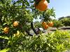 Alimentare: Bellanova, biologico italiano conquista quote