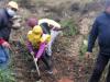 Bosco distrutto dall'incendio a Erice, i bimbi piantano nuovi alberi
