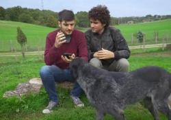 Le Coliche come Benigni e Troisi: la lettera alla Lav a sostegno degli animali  La parodia della scena della lettera a Savonarola in «Non ci resta che piangere» per sostenere la campagna solidale dell'associazione animalista - Corriere Tv