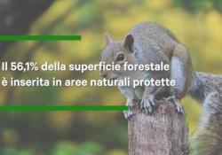 Legambiente: «La bioeconomia delle foreste deve essere un pilastro del Recovery Plan Italiano»  Boschi e foreste sono preziosi alleati nella lotta alla crisi climatica e principale infrastruttura verde del Paese con le filiere forestali che generano l'1,6% del Pil e oltre 300mila occupati. Ser...