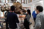 Catania, l'antico Museo di Zoologia si rifà il look