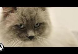 «Noi crediamo nella pet therapy». Celentano, Ruffini e Maritato per Frida's Friends L'appello a sostenere l'associazione che ha portato gli animali in cliniche, rsa e aeroporti. E che ora punta ad estenderla agli ospedali di tuttaIitalia - Corriere Tv
