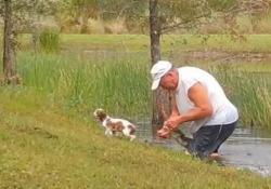 Salva il suo cagnolino dalle fauci di un  alligatore e lo fa  tenendo un  sigaro in  bocca Il video pubblicato su TikTok è stato ripreso in Florida - CorriereTV