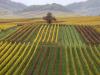 Crédit Agricole Italia per supportare la filiera vino