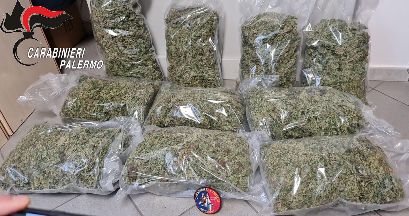 Piana Degli Albanesi Nascondeva In Casa 10 Chili Di Marijuana Che Avrebbe Fruttato 100mila Euro Giornale Di Sicilia
