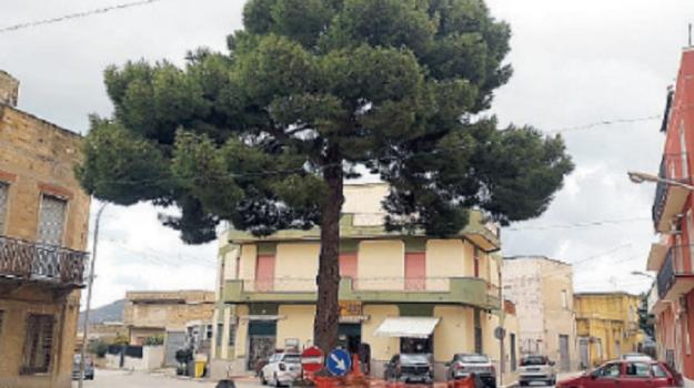 alberi, Trapani, Cronaca
