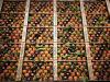 Meteo annienta la produzione di clementine per 70 milioni