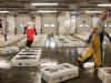 Covid: Crea, pesce surgelato in tavola batte record (+20%)