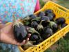 Agricoltura bio, sul portale della Regione 2400 aziende