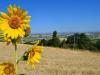 Agricoltori a lezione di sostenibilità, parte portale Cia