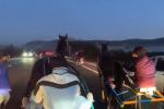 Organizzano corsa clandestina di cavalli e pubblicano video su Facebook: 8 denunciati a Noto