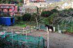 Messina, cavallo tra i rifiuti in una stalla abusiva: scatta il sequestro