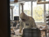 Coronavirus, 10.593 nuovi casi e 541 decessi in 24 ore