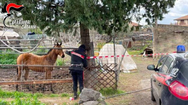 animali, corsa clandestina cavalli, paternò, Catania, Cronaca