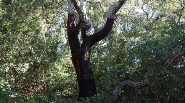 foresta, Trapani, Cultura