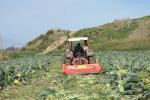 """Agricoltura, Arancio: """"Ristori per il virus Tomato Brown a Trapani e Siracusa"""""""