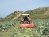 Aziende agricole in crisi, a Sciara centinaia di prodotti distrutti perché invenduti