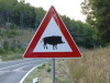 Cinghiali: Cia, Italia in zona bianca torna allarme stradale