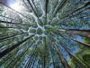 Le foreste europee sempre più minacciate dal cambiamento climatico (fonte: Pixabay)