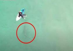 Australia: il surfista non si accorge dello squalo sotto la tavola. Ecco cosa succede La scena catturata da un drone in una baia a nord di Sydney - CorriereTV