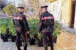 Una piantagione indoor di cannabis nella casa al mare, 52enne arrestato a Catania