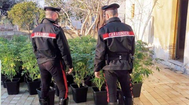 cannabis, Catania, Cronaca