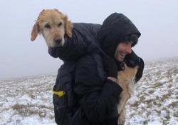 Salvano il  cane disperso tra le montagne e lo portano ai proprietari dopo 10 km di cammino Il Golden retriever «Naoise» si era perso tra le montagne innevate di Wicklow, in Irlanda - CorriereTV