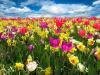 I colori dei fiori cambiano con il clima (fonte: Pixabay)