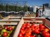 Cia, inserire indirizzo Agro-ecologico in Facoltà di Agraria