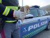 La Polizia stradale in soccorso di un barbagianni in difficoltà