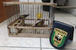 Cardellini sequestrati a Caltanissetta, liberati nel sito protetto di Villarmosa