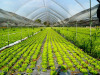 Assobenefit e AssoBio insieme per promuovere la sostenibilità integrale