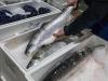 Pesce decongelato venduto come fresco, multato un ambulante al porto di Trapani