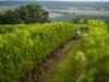 8 marzo: Istat lancia contest Donne e sostenibilità in agricoltura