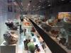 A museo Scienza Naturale Milano i minerali cambiano look