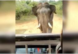 L'elefante (giustamente) arrabbiato insegue il veicolo con i turisti La scena catturata in un parco nazionale nello Sri Lanka - CorriereTV