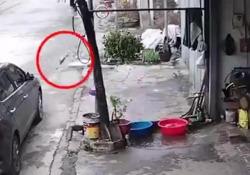 La fuga del pesce appena pescato: scappa dal contenitore e corre verso la libertà La curiosa scena ripresa nella città di Tuyen Quang, nel nord del Vietnam - CorriereTV