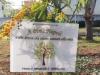 8 marzo, a Palermo un albero di mimose in memoria di Piera Napoli
