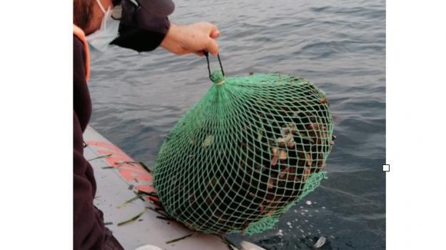 pesca, Trapani, Cronaca