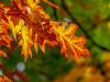 La velocità dei venti cambia la tempistica del foliage autunnale (fonte: Pixabay)
