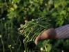 LEuropa vuole più bio, semi liberi per attuare Green Deal