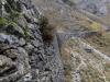 """Progetto Italia-Svizzera promuove """"paesaggio terrazzato"""""""